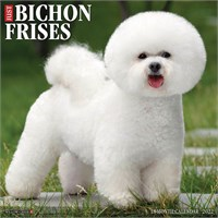 2012 Bashful Bichon By Myrna Calendar Best Price