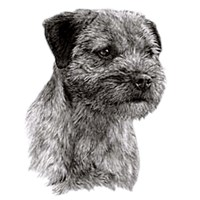 Border Terrier Shirts