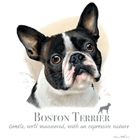 Boston Terrier T Shirt by Howard Robinson