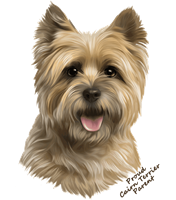 Cairn Terrier T Shirt - Proud Parent
