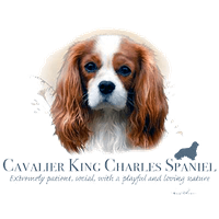 Cavalier King Charles T Shirt by Howard Robinson