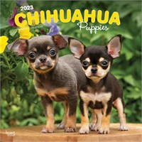 2012 Too Cute Chihuahua By Myrna Calendar