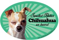 Chihuahua Apple Car Magnet - Spoiled Rotten