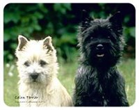 Cairn Terrier Coasters