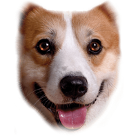 Corgi T Shirt Full Face