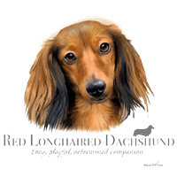 Dachshund T Shirt Red Longhaird Howard Robinson