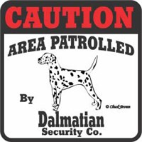 Dalmatian Bumper Sticker Caution