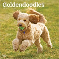 Goldendoodle Calendar 2019 Brown Trout