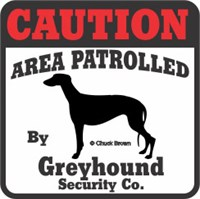 Greyhound Bumper Sticker Caution