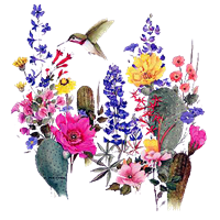 Hummingbird T Shirt Desert Blooms