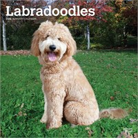 Labradoodle 2017 Calendar Brown Trout