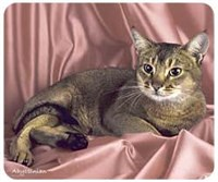 Image of Abyssinian Cat Mousepad