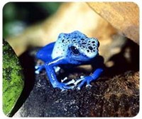 Blue Poison Frog Mouse Pad