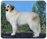 mousgreatpyr Great Pyrenees Mousepad