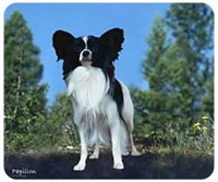 mouspap Mousepad: Papillon