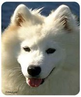 Samoyed Mousepad