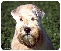 Wheaten Terrier Mousepad