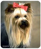 mousyorter Mousepad: Yorkshire Terrier