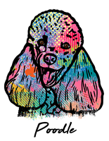 Poodle T Shirt Colorful Abstract