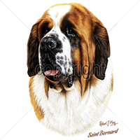 Saint Bernard T Shirt by Robert May