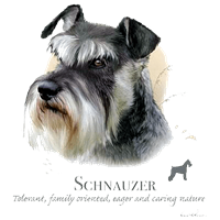 Schnauzer T Shirt by Howard Robinson