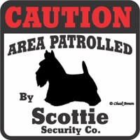 Scottish Terrier Bumper Sticker Caution