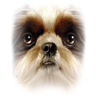 Shih Tzu T Shirt Full Face