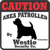 Westie Bumper Sticker Caution