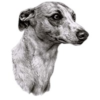 Whippet Shirts